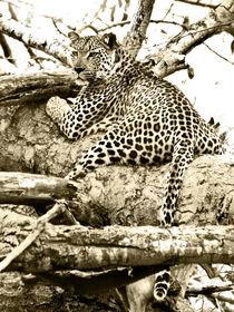 Leopard-bw-sepia