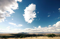 Mountain Zebra National Park, South Africa von Eva Stadler