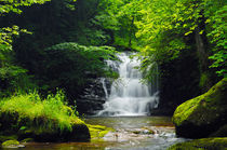 Woodland Waterfall by Craig Joiner