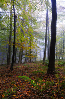 Autumn Woodland by Craig Joiner