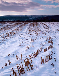 Snow coverd field, Somerset, England. by Craig Joiner