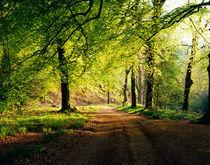 Hore Wood, Dartmoor, England by Craig Joiner