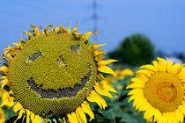 Sun von vrb vorobiov