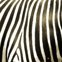 zebra von james smit