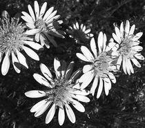 flora von james smit