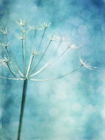 iceblue by Priska  Wettstein