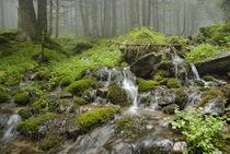 creek in wild wet Carpathian forest von pasha66