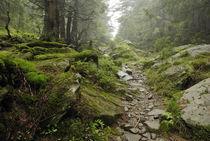 track in wilde forest in Carpathians von pasha66