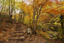 stairway on a hill in autumn forest von pasha66