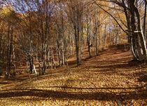 autumn forest in Crimea von pasha66