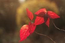 autumn colors of leaves von pasha66