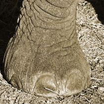 elephant foot von james smit
