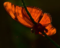 silhouette of butterfly von james smit