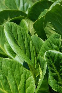 green leaves von pasha66