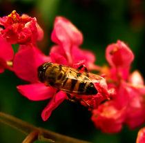 honeybee von james smit