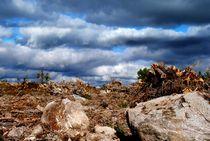 wenn die Erde weint stirbt irgendwo ein Baum by tinadefortunata