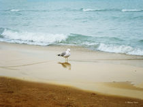 Bird on the Beach by Milena Ilieva