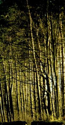 Sun On Trees von Peter Valente