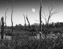 Moon-im-swamped