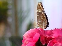 butterfly by rickyss