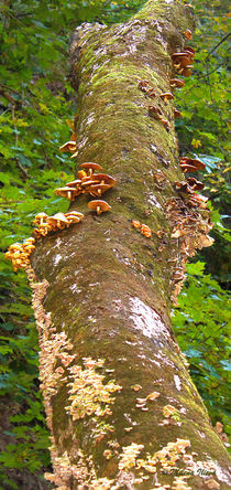 Mushroom's Kingdom by Milena Ilieva