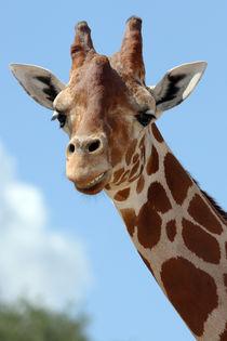 Smiling Giraffe (Giraffa camelopardalis)  von Howard Cheek