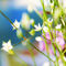 Biale-kwiatki2print