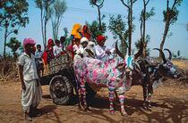 Heilige Kühe bei der Arbeit von Claudia Färber