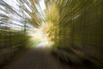 Waldweg - forest track by Werner Schulteis