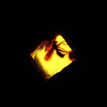 Mosquito in amber by Amirali Sadeghi