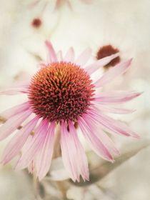 Echinacea   von Priska  Wettstein