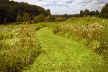 Gardenfieldmorn
