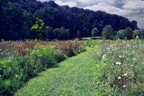Garden wildflower field. by Susan Isakson