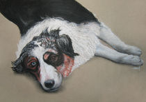 Australien Shepard Kimba by Kathrin Es-Saidy