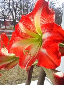 Blume von M. Lehmann