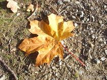 Natur FOTO  Herbst 2 von M. Lehmann