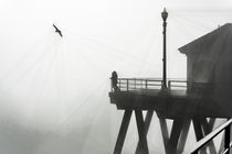 Huntington Beach Pier in Fog with a Seagull by Eye in Hand Gallery