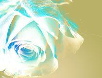 Mint blue wonderful Rose by Martina Ute Rudolf