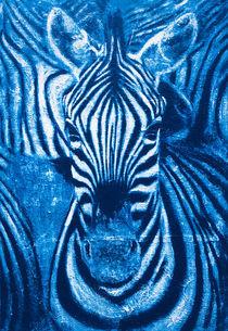 Zebra von wenzelbilderlust