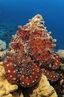 Octopussy von Norbert Probst