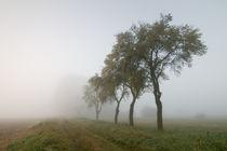 Herbstnebel by Stefan Michalski