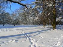 Winter im Park von Ralf Schröer