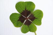 Glücksklee, Vierblättrig, Glücksbringer, Glück,  by Bernard Fox