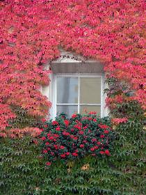 Fensterschönheit by christian grünberger TIAN GREEN