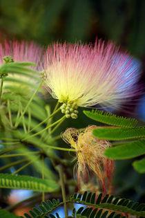 Exotische Blüte von Astrid Isensee