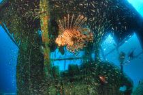 HDR - Feuerfisch von Heike Loos