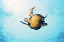 Schildkröte von Heike Loos