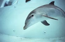 Delphin von Heike Loos