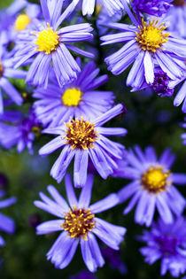 Blumen by Ralf Kochems