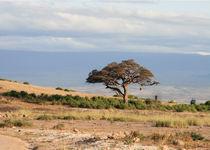 landscape Tsavo East von Stefanie Härtwig